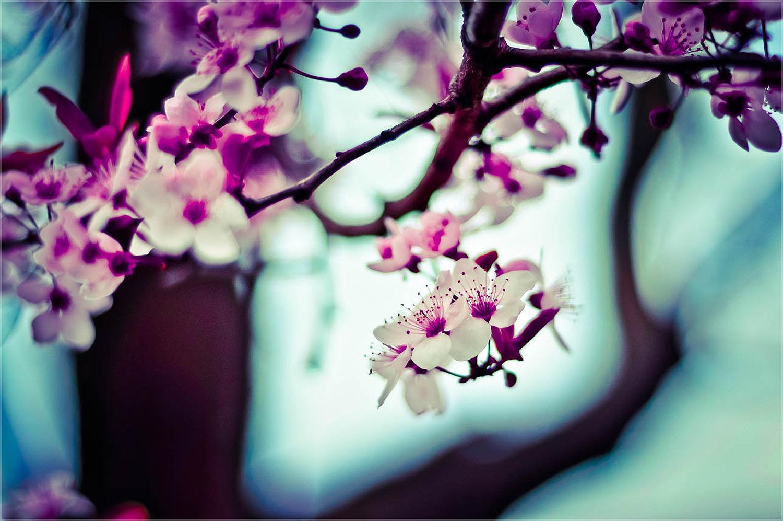 healing flower essences